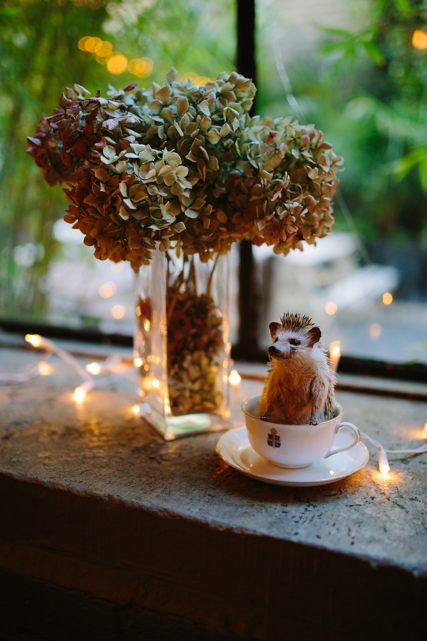 Stuffed Hedgehog in a teacup